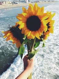 Girls Favourite Flowers - sunflowers have really been standing out to me lately i think i