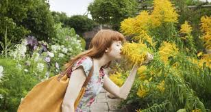 the best gardens to visit in ireland this summer
