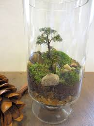 377 best terrariums u0026 fairy gardens images on pinterest fairies