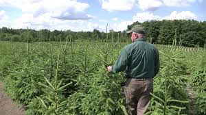 dutchman tree farms youtube