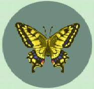tiger butterfly nookipedia the crossing wiki