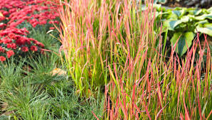 9 things to about ornamental grasses