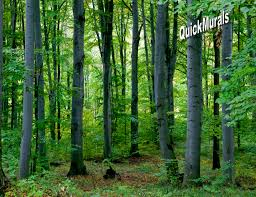 woodland forest peel and stick wall mural themuralstore com