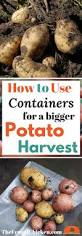 best 25 potato growing containers ideas on pinterest grow