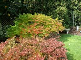 Bright Color Setting Bright Fall Color From Shrubs U2014 A Southern Gardener