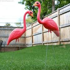 pink flamingo lawn ornaments donald featherstone and the pink lawn flamingo