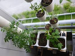 hydroponic gardening part 1 an overview