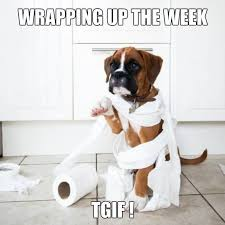 boxer dog sayings 265 best weekday quotes images on pinterest animals funny