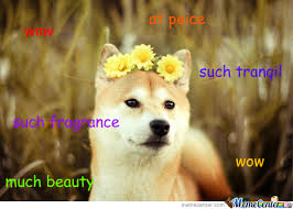Doge Meme Tumblr - wow toilets 10 10 would sit such comfortable wow by frenchboy