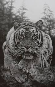 best 25 face pencil drawing ideas on pinterest pencil sketch