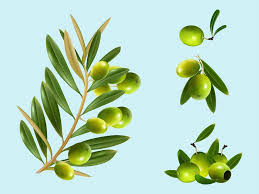 martini olive vector olive clipart vector pencil and in color olive clipart vector