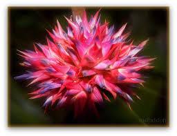 amazon rainforest native plants amazon rainforest flowers