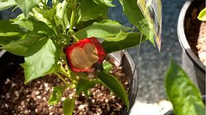 abiotic environmental disorders organic gardening blog
