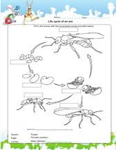 2nd grade science worksheets for practice pdf