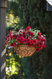 Container Garden Ideas Full Sun Easy Wave Red Velour Petunia U2026 Container Gardening Pinterest
