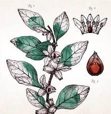 siege social botanic the botanical secret ashwagandha botanic lab