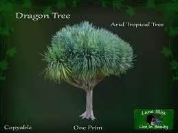 second marketplace tree rainforest jungle