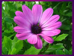 spring flower closeup