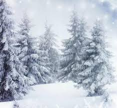 5x7ft pine tree snow studio backgrounds for photos muslin computer