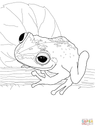 coqui frog coloring free printable coloring pages