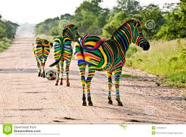 Image Of South African Flag South African Zebras Stock Photo Image Of Protect Wildlife