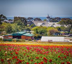 carlsbad flower garden friends of farming san diego county flowers tubers and
