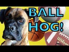 boxer dog youtube brock the boxer dog harlem shake youtube why i love boxer