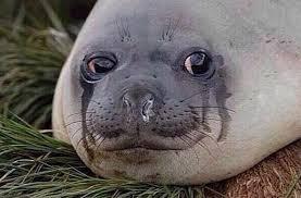 Gay Seal Meme Generator - gay seal meme generator mne vse pohuj