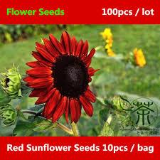 ornamental plants sunflower seeds 100pcs strong adaptability