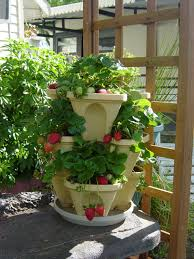 container gardening landscape container gardening of strawberry decoration with cream
