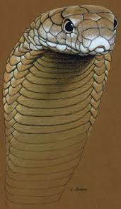drawn to u201d reptiles