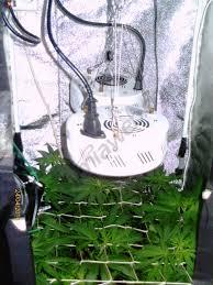construire sa chambre de culture cultiver du cannabis en espaces réduits du growshop alchimia