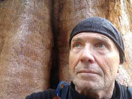 the sequoia forest paulwaite888