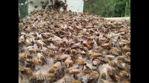 explanation of a bee line honeybees youtube