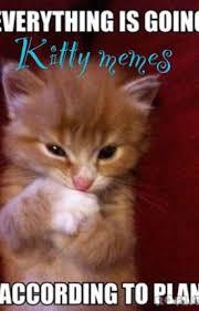 Meme Kitty - kitty memes i m not afraid wattpad