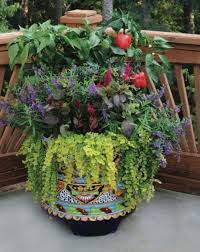easy container combos vegetables and flowers bonnie plants