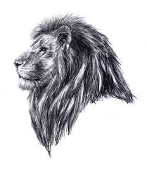 great lion tattoo sketch tattooshunter com