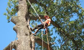 tree service omaha ne tree trimming removal arbor tree care