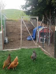 quick temporary chicken coop ideas backyard chickens