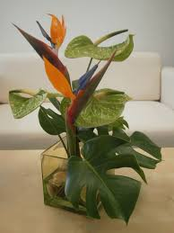 In House Plant Bird Of Paradise Anthurium And Monstera Leaf Centerpiece In