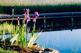 san diego native plant society california perennials best perennials for your garden install