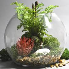 terrarium kit with faux plants by london garden trading