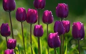 Spring Flower Pictures Spring Flower Ge Decoration Clip Art Library