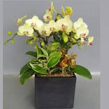 Orchid Delivery Orchids Archives Flower Gift Korea 240 5 Star Reviews Same