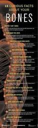 best 25 body bones ideas on pinterest skeleton anatomy human