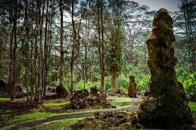 what are lava trees and how are they formed mnn nature