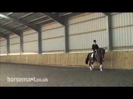 56 best improving the ride images on pinterest horses horse