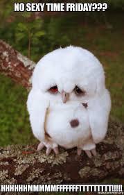 Sexy Time Meme - no sexy time friday hhhhhhmmmmmfffffffttttttttt sad owl