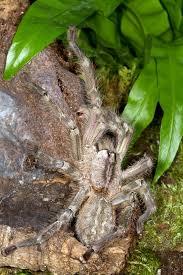 photos of theraphosidae tarantulas or bird spiders