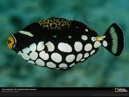 top ten most beautiful and colorful fish all aquarium info